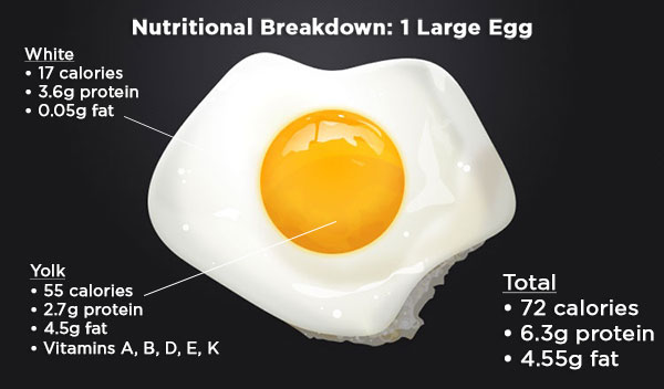 Nutrition breakdown of one egg!