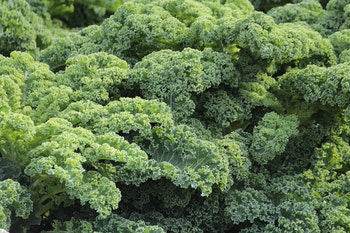 K is for kale, a great source of vitamin K
